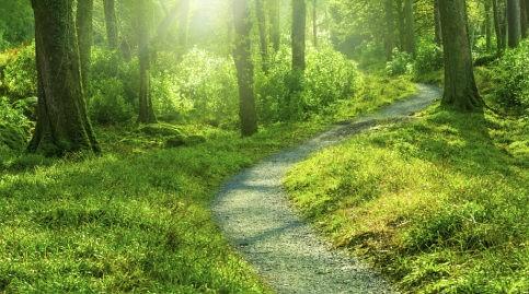 A Path Forward - DVS Legal Services